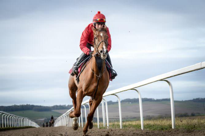 Sherwoods Pippa Horse Galloping